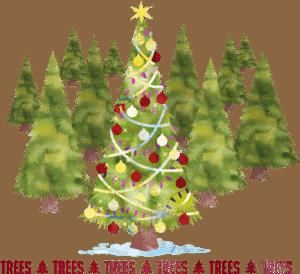 Fresh Christmas Trees.Christmas Trees Bells Nursery